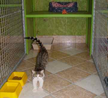 pension pour chat paris pension pour chat paris luxe 4 toiles pension pour chat paris prise a. Black Bedroom Furniture Sets. Home Design Ideas